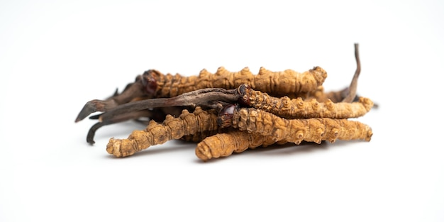 Ophiocordycepssinensisまたはキノコ冬虫夏草をクローズアップこれはハーブです
