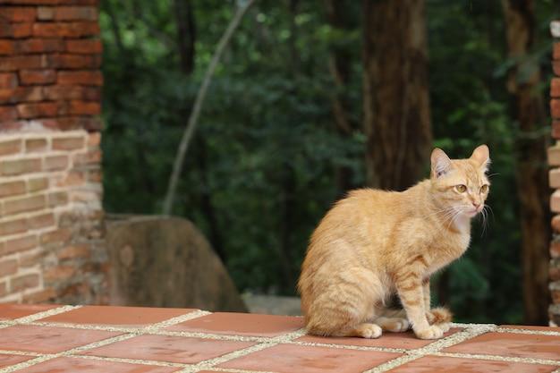 タイの寺院でオレンジ色の猫を閉じる