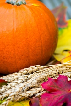 Close up of the orange pumpkin and autumn leaves on wooden background