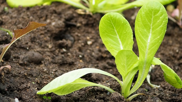 Close up a organic green tree