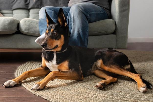 Chiuda sul proprietario sul divano e sul cane di smiley