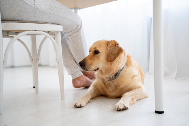 Proprietario da vicino e cane carino