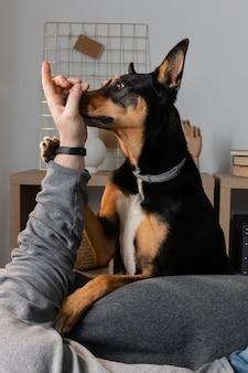 Primo piano proprietario e cane che giocano