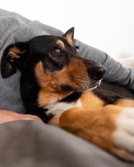 Chiuda sul proprietario che tiene simpatico cane