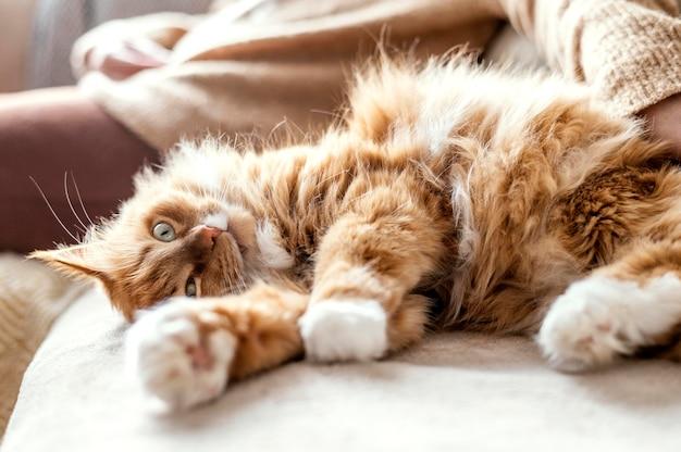 Крупным планом владелец с милой кошкой на диване