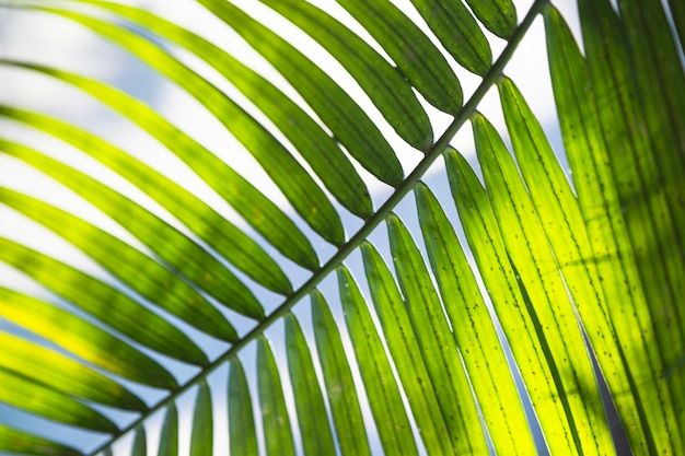 Close-up palm leaf on sky background