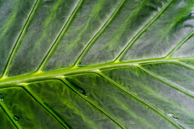 Close up of palm leave in the palm house