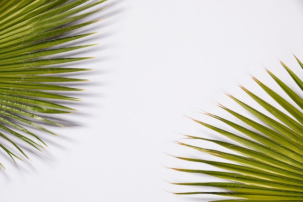 Close up of palm leaves background