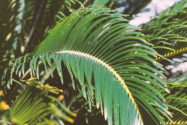 Close up palm leaves background