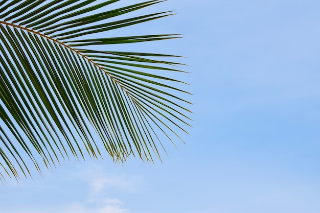 복사 공간, 낮은 각도 보기가 있는 맑고 푸른 하늘 위에 야자수 잎을 닫습니다