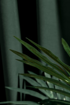 Close up palm tree leaves