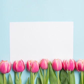 Close-up paper and tulips