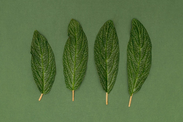 Close-up parallel leaves on green background