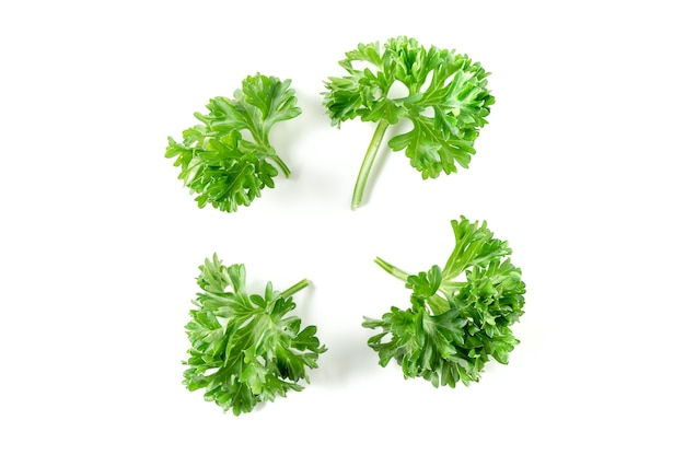 Close up of parsley leaf isolated on white