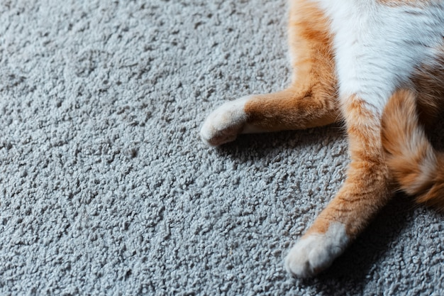 Close-up of paws of red white cat lying on the floor.