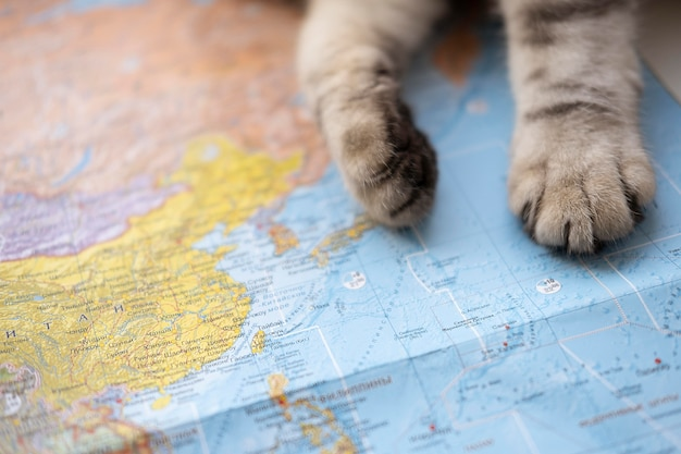 Close-up paws and world map