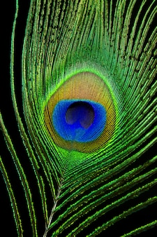 Close up peacock eye