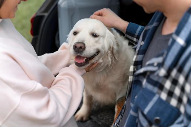 Крупным планом люди ласкают собаку