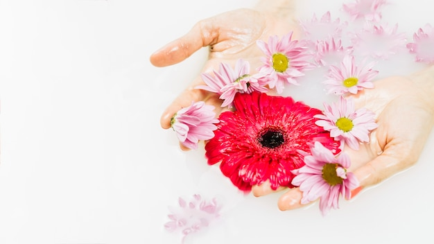 Close-up of a person's hand holding pink and red flowers