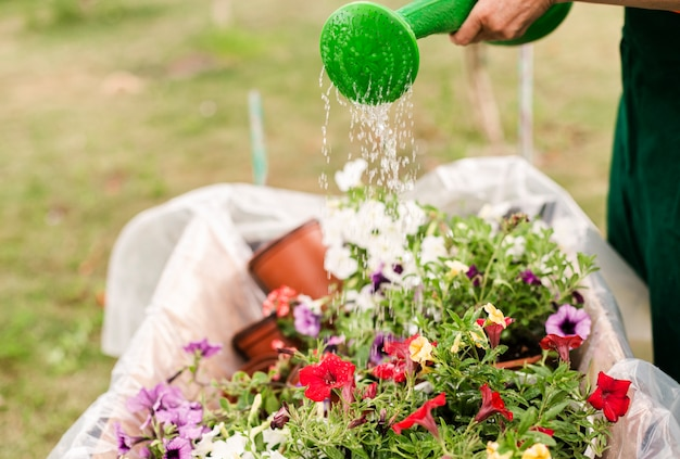 Close-up person watering flowers
