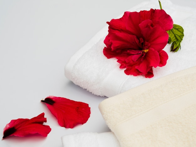 Close up petals by the towels