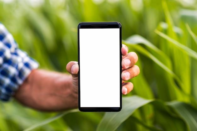Close up phone a corn field mock-up Premium Photo