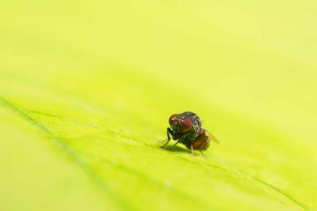 Close up photo of drosophila melanogaster on leaf