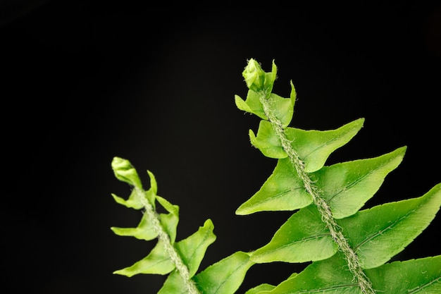 Close up photo of fern branch on black background