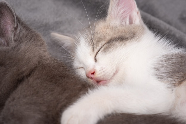 Close-up photo of little kitten sleeping near her brother and hugging him. pretty small cats together