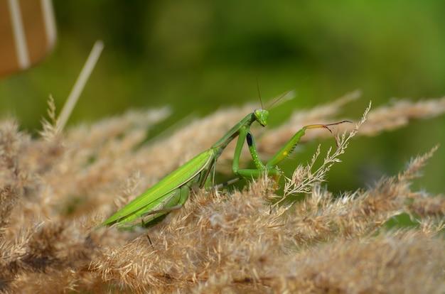 녹색 사마귀의 근접 사진