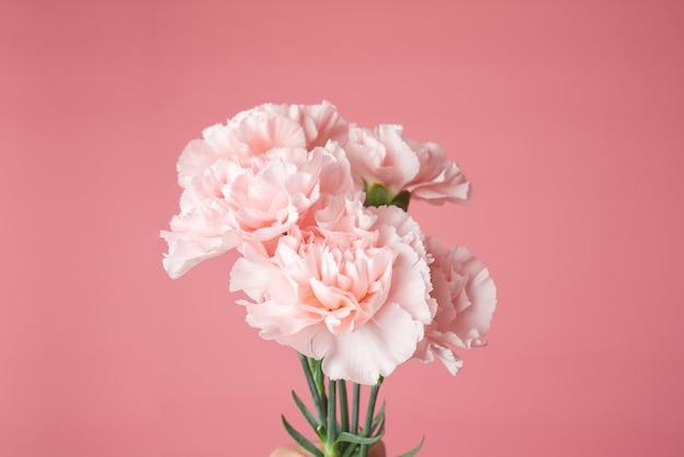 고립 된 핑크 카네이션 꽃다발의 사진을 닫습니다