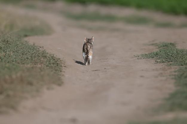 들판의 삼색 고양이(고양이) 클로즈업 사진