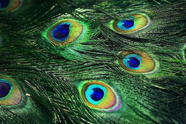 美しい孔雀の尾の写真をクローズアップ。