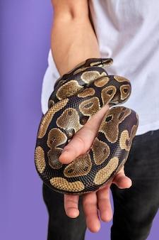 人間の手に美しいヘビ、人々の手にエキゾチックなペットの動物、訓練されたのクローズアップ写真。