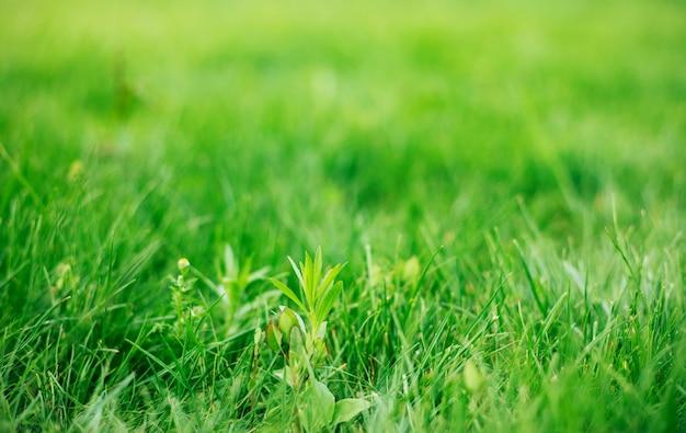 여름철 야외에서 생생한 녹색 잔디의 사진을 닫습니다