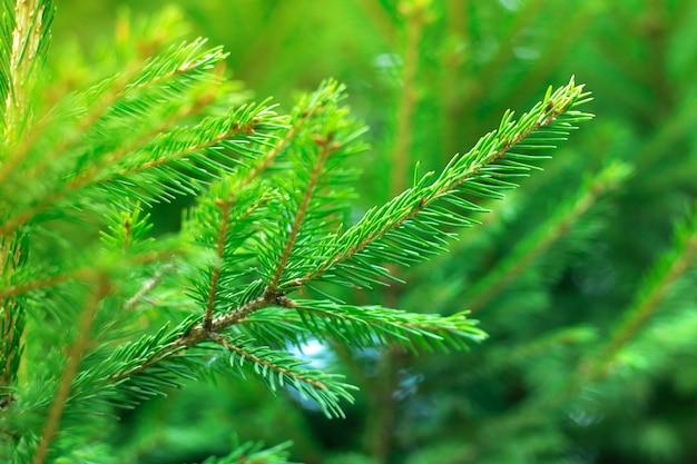 晴れた日の間に松の木の枝のクローズアップ写真。