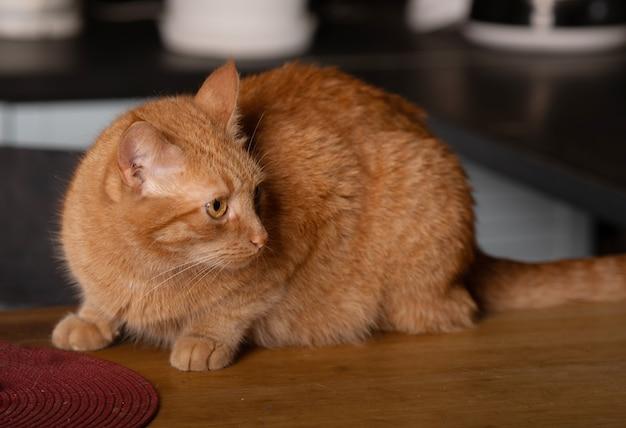 Закройте вверх по фото красного кота при зеленые глаза смотря прямо к камере.