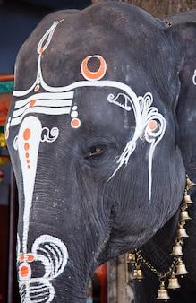 Крупным планом фото глаза священного слона в индуистском храме