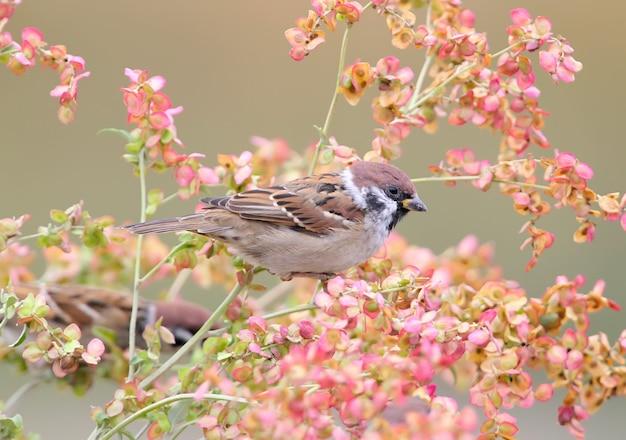 핑크 꽃에 나무 참새의 사진을 닫습니다