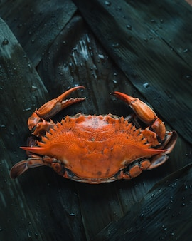 Close-up photo of an orange crab, top view