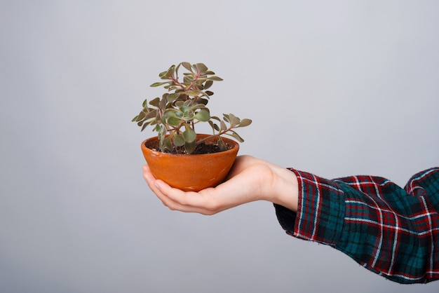 Close up photo of woman hand holding a plant over white wall