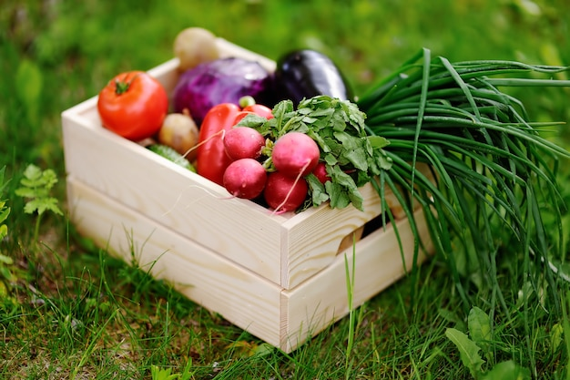 Close up photo of wooden crate with fresh organic vegetables from farm