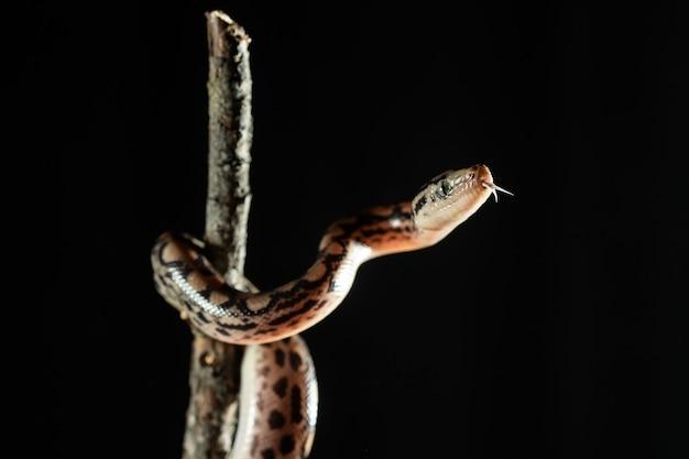 나뭇 가지에 이국적인 뱀의 사진을 닫습니다.