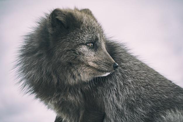 灰色の動物のクローズアップ写真