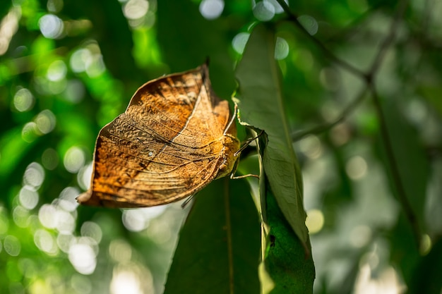 Close up picture of butterfly on the leaf nature