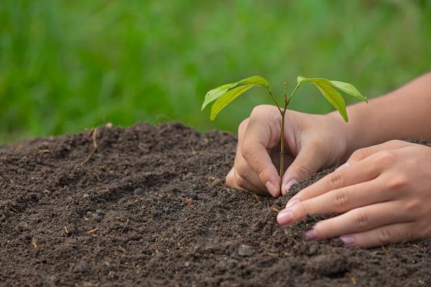 Primo piano immagine della mano che tiene piantare l'alberello della pianta