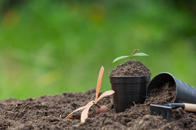 土に置かれた園芸用品のクローズアップ写真