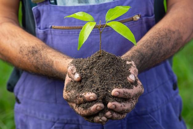 植物の苗木を持っている庭師の手の写真をクローズアップ