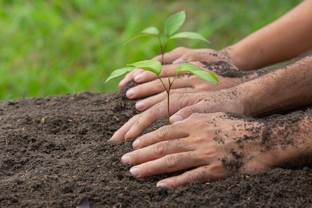 植物の苗木を植える手持ちの写真をクローズアップ