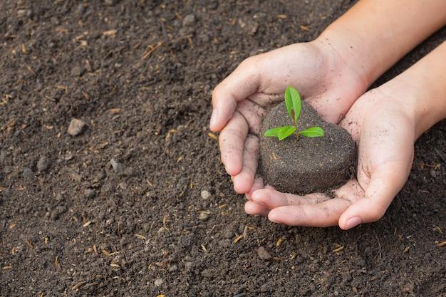 식물의 묘목을 심는 손을 잡고 사진을 닫습니다.